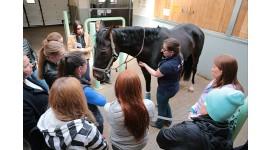Завершился семинар «Теория и методика физической культуры и спорта. Тренер по конному спорту»