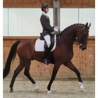 Теория и методика физической культуры и спорта. Тренер по конному спорту.