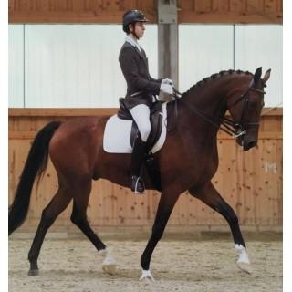 Теория и методика физической культуры и спорта. Тренер по конному спорту